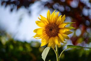 nature bloom blossom delicate